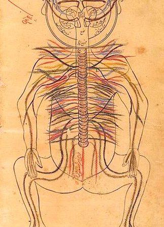 Sinir Sistemi ve Hastalıklarının Tarihçesi