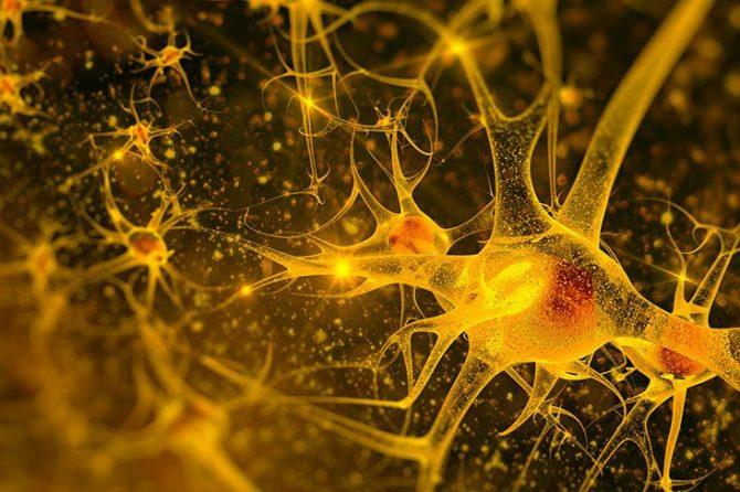 ALS'ye yatkınlık : NEK1 geninin bulunması